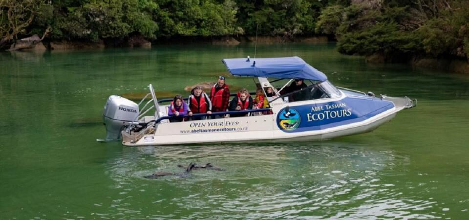 Boat Tours in Nelson